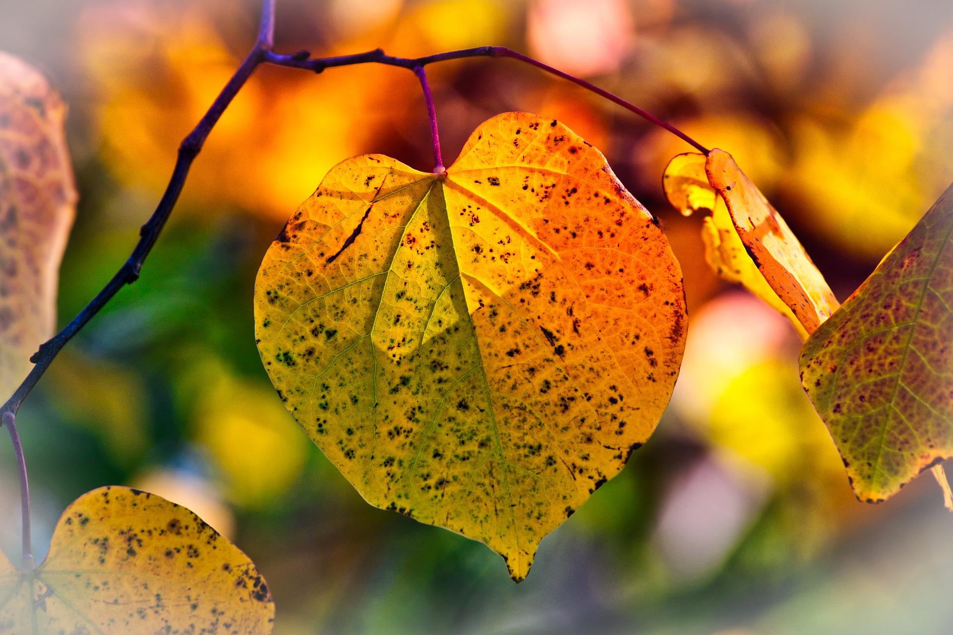 otoño para vivir